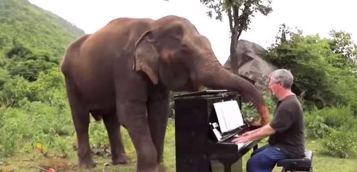 Con el poder de la música, un pianista clásico ayuda a un grupo de elefantes ciegos en TailandiaCon el poder de la música, un pianista clásico ayuda a un grupo de elefantes ciegos en TailandiaCon el poder de la música, un pianista clásico ayuda a un grupo de elefantes ciegos en Tailandia