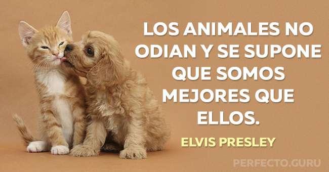 Las 20 Mejores Frases Sobre Animales