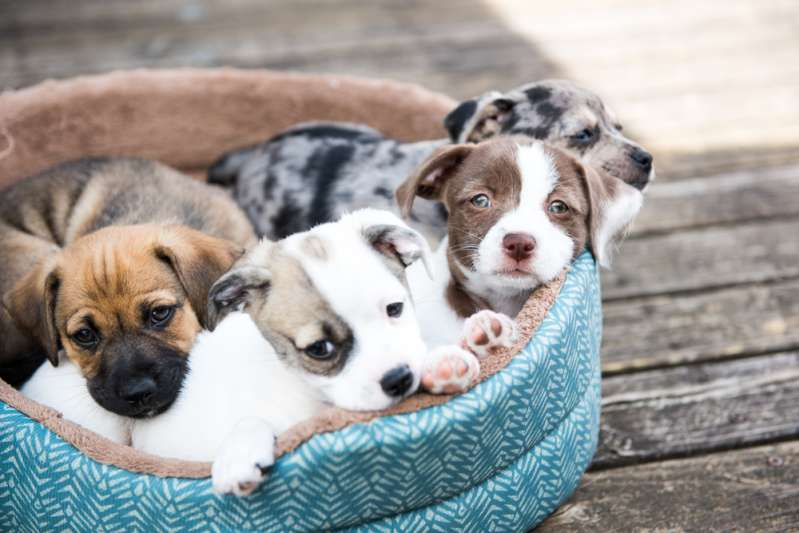 Nearly 200 Puppies Were Happily Saved After Being Found In Terrible Iowa's Puppy Mill