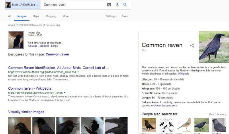 Кто это — кот или ворон? Правильный ответ не смог дать даже Google!Кто это — кот или ворон? Правильный ответ не смог дать даже Google!