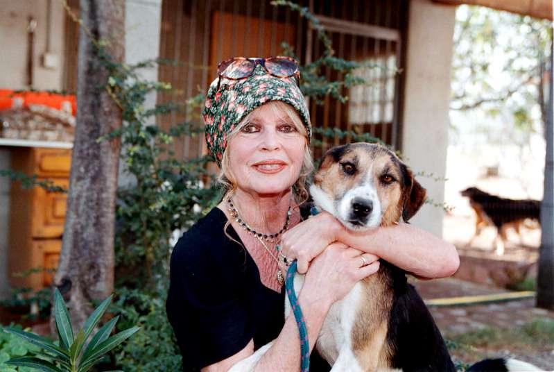 Les survivants : ces 5 signes du zodiaque ont davantage de chances de vivre longtempsbrigitte bardot posing with a dog