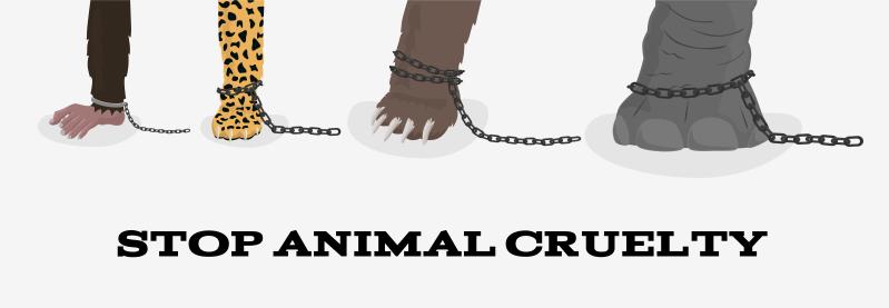Типы жестокого обращения с животными: от простой халатности владельцев до звероферм