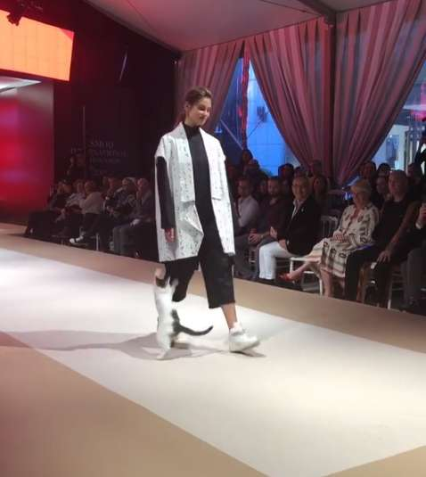 Cat On A Catwalk! Adorable Feline Took The Runway At The Fashion Show And Stole The Thunder In No Time