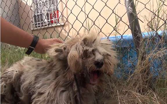 Neglected Dog From The Streets Get Rescued By Locals, And Transformed Incredibly. His Makeover Is Jaw-Dropping!