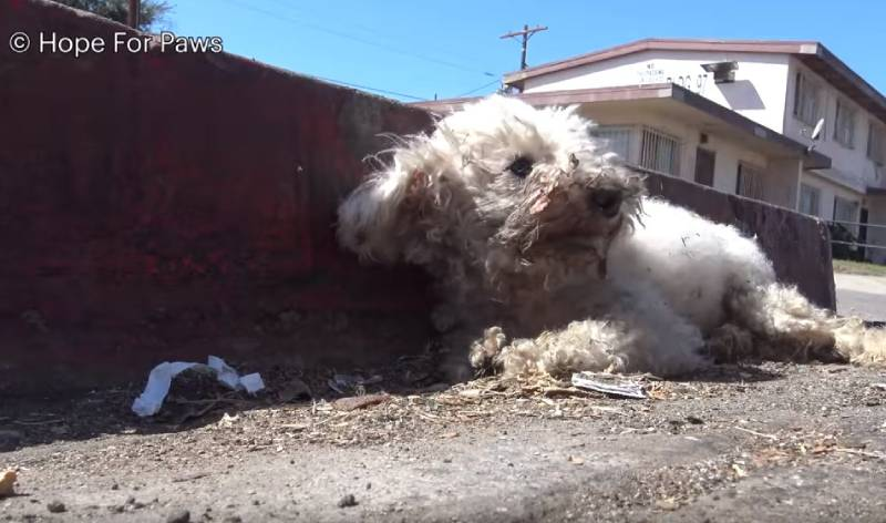 Dog Injured In An Accident Waited To Be Rescued For 24 Hours, But The New Owners' Love Came As A Miracle