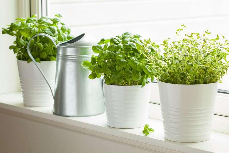 10 superpflanzen die insekten von ihrem zuhause fern halten werden besser als chemikalie bei. Black Bedroom Furniture Sets. Home Design Ideas