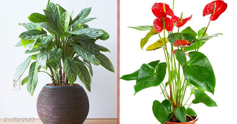 10 piante da interno che richiedono poca luce e possono ...