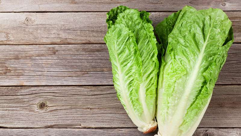 E. Coli Warning! Dozens Of People Infected In USA And Canada After Eating Romaine Lettuce