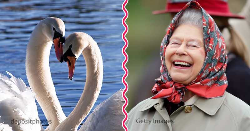 Swans Have Come Back >> Queen Elizabeth Owns Many Swans And Dolphins, And Not Only I - on Fabiosa