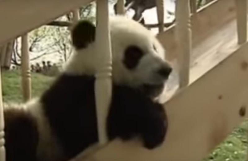 Diese Süßen Pandas Wurden Alleine Auf Dem Spielplatz Zurückgelassen, Was Diese Dann Machen Ist Einfach So ZuckersüßDiese Süßen Pandas Wurden Alleine Auf Dem Spielplatz Zurückgelassen, Was Diese Dann Machen Ist Einfach So Zuckersüß