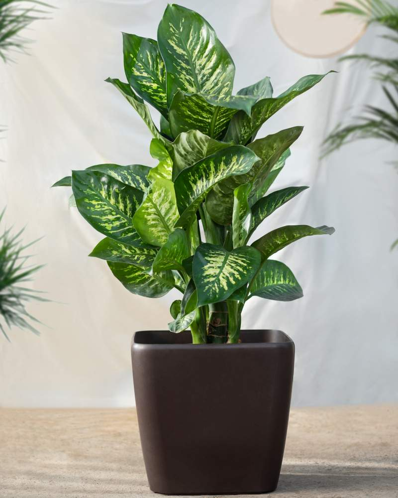 10 Indoor Plants With Low Light Requirements That Can Brighten Your Home10 Indoor Plants With Low Light Requirements That Can Brighten Your Home10 Indoor Plants With Low Light Requirements That Can Brighten Your Home10 Indoor Plants With Low Light Requirements That Can Brighten Your Home10 Indoor Plants With Low Light Requirements That Can Brighten Your Home10 Indoor Plants With Low Light Requirements That Can Brighten Your Home10 Indoor Plants With Low Light Requirements That Can Brighten Your Home10 Indoor Plants With Low Light Requirements That Can Brighten Your Home10 Indoor Plants With Low Light Requirements That Can Brighten Your Home10 Indoor Plants With Low Light Requirements That Can Brighten Your Home10 Indoor Plants With Low Light Requirements That Can Brighten Your Home10 Indoor Plants With Low Light Requirements That Can Brighten Your Home