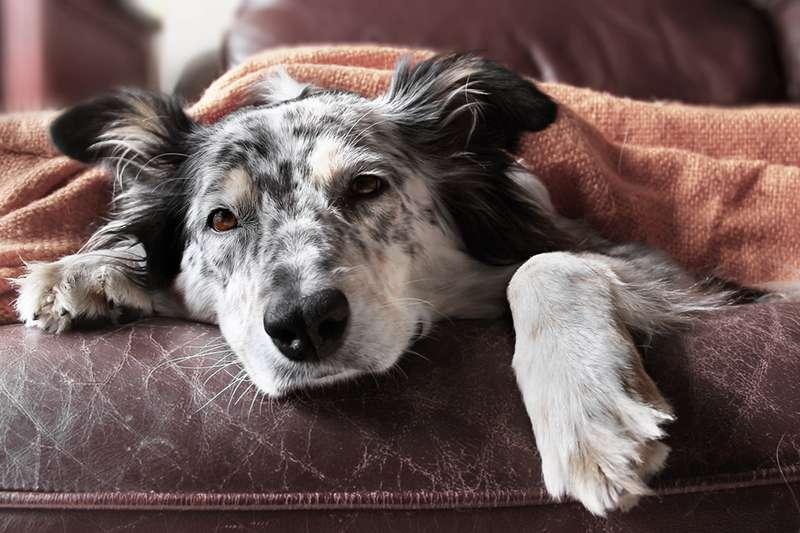 Cavó una tumba frente a su perro porque le dijeron que debía sacrificarlo: pero una llamada de último minuto le confirmó que estaba sano