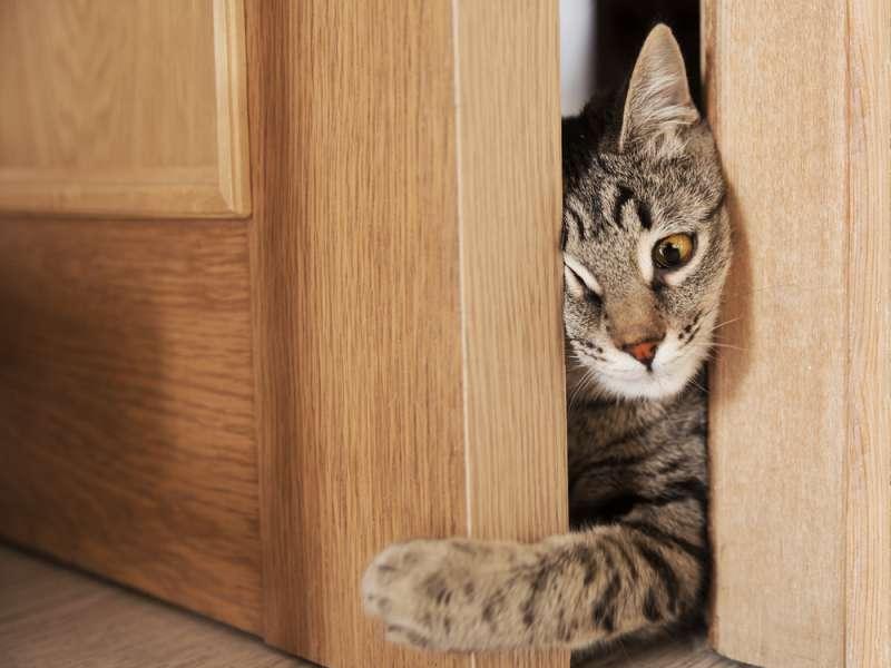 Не надо так! 5 роковых ошибок, которые допускают кошатникиdoor cat