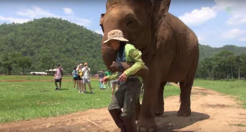 Mamá elefante trajo a una cantante humana para que deleitara a su hija con su hermosa voz