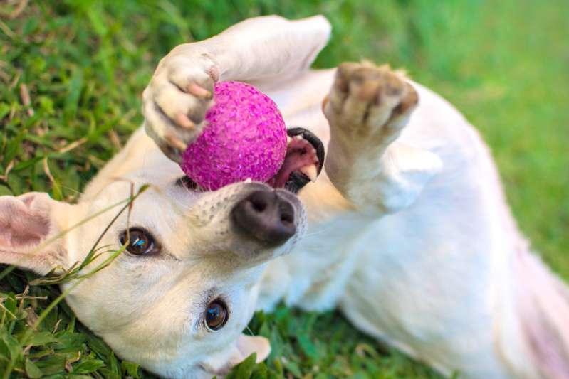Бездушных хозяев собачки раскритиковали в Сети из-за причины, по которой животное выставили на продажу