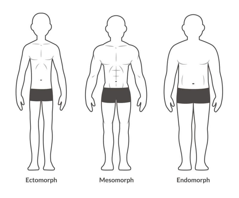 Ectomorfo, endomorfo y mesomorfo: los tipos de cuerpos y sus tendencias a adelgazar o engordar