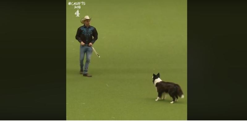 Man's Best Friend, Man's Best Dance Partner! Cowboy And His Border Collie Amaze Dog Show Fans With Lovely Routine To Country Song