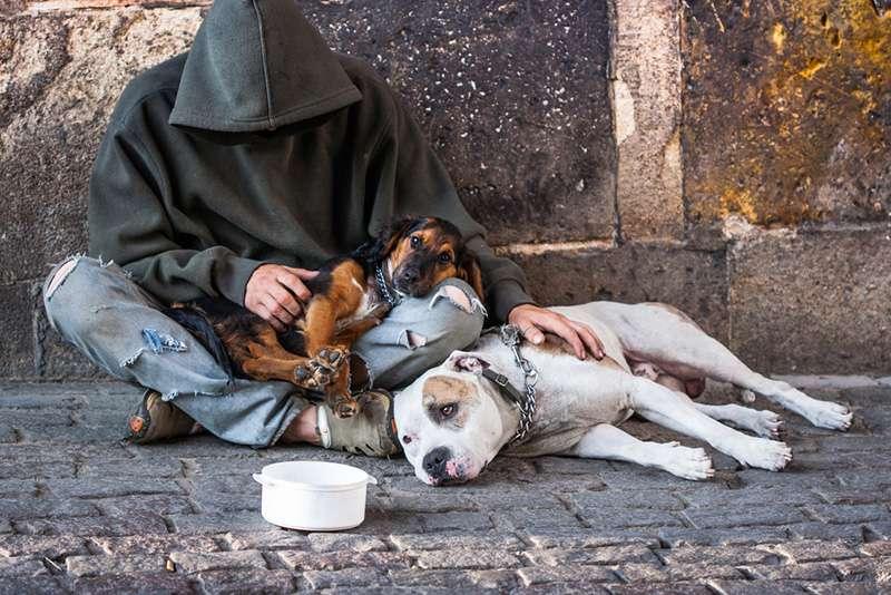 Mientras un hombre sin hogar estaba en el hospital, sus 4 perros leales lo esperaban en la puerta