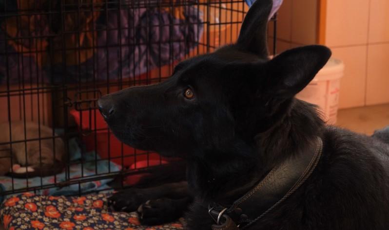 Jeté à la rue suite à une maladie quand il était chiot, il devient nounou pour animaux après avoir été sauvé