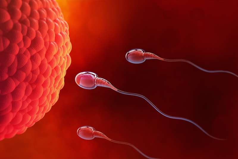 Changes In Men's Reproductive Function And Sperm At Different Ages
