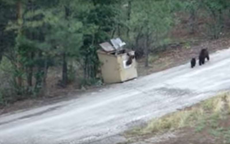 Des voisins alertés par les pleurs d'une maman ours sauvent 3 oursons coincés toute une nuit dans une poubelle