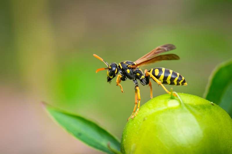 Un horoscope spécial : l'esprit insecte de chaque signe du Zodiaque