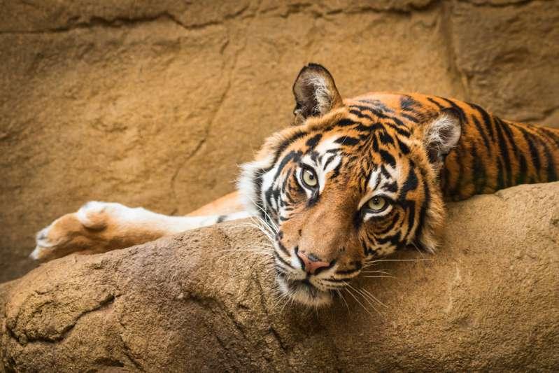 Tiere in Gefangenschaft: Herzzerreißende Aufnahmen zeigen zurückgelassene Tiere in einem ehemaligen Zoo