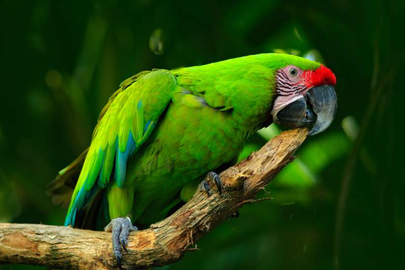 Parrot Sounds Exactly Like A Crying Baby - So Hard To Find