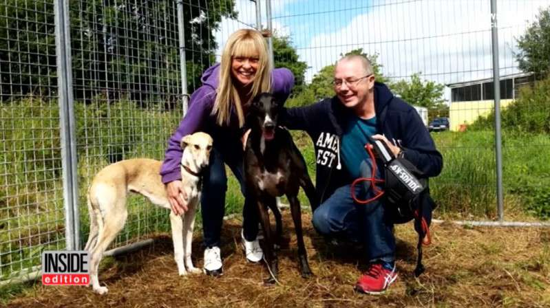 Du soutien et des soins sont essentiels pour tout chien mais vous devez savoir comment aider un chien maltraitéA greyhound mix recovers with the help of new family after horrible animal abuse