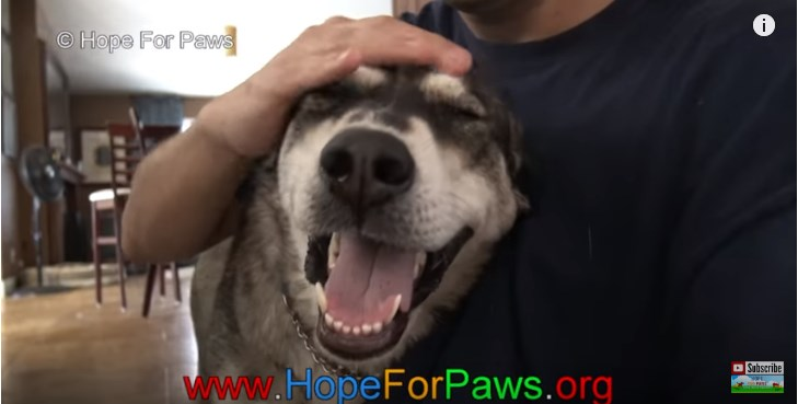 Adandoned And Heartbroken 'Wolf-Hybrid' Dog Gets Completely Healed And Finds Home After The RescueAdandoned And Heartbroken 'Wolf-Hybrid' Dog Gets Completely Healed And Finds Home After The RescueAdandoned And Heartbroken 'Wolf-Hybrid' Dog Gets Completely Healed And Finds Home After The RescueAdandoned And Heartbroken 'Wolf-Hybrid' Dog Gets Completely Healed And Finds Home After The RescueAdandoned And Heartbroken 'Wolf-Hybrid' Dog Gets Completely Healed And Finds Home After The Rescue