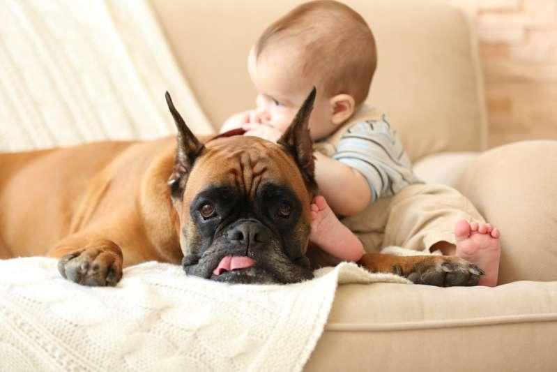 Un chien berce un bébé pour l'endormir. Sur internet, les réactions sont vives, un chien est-il une bonne nounou ?