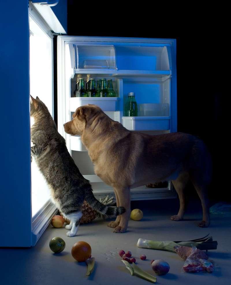 Das Kätzchen Ralphee leidet an einer signifikanten Einschränkung der Gesundheit, jedoch fand sie Komfort und Freundschaft in einem Hund namens MaxDas Kätzchen Ralphee leidet an einer signifikanten Einschränkung der Gesundheit, jedoch fand sie Komfort und Freundschaft in einem Hund namens Max