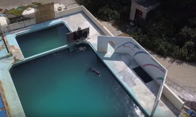 Inacceptable : un dauphin et d'autres animaux marins sont enfermés dans les minuscules bassins d'un aquarium désert