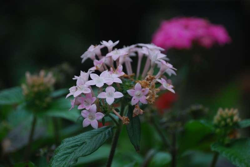 5 Tipos De Plantas De Pocos Cuidados Que Harán Que Tu
