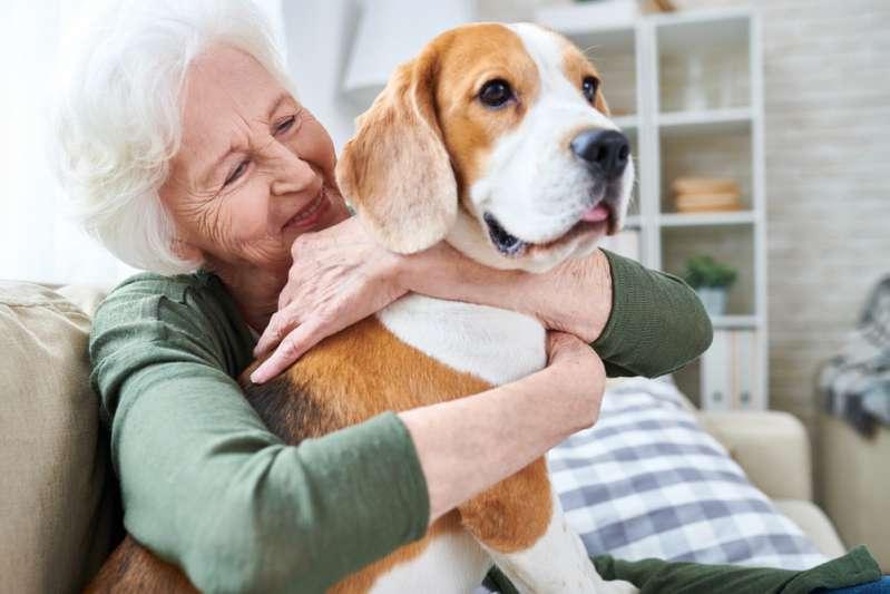 La foto de este perrito consolando a un paciente en una clínica veterinaria es sensación en las redes