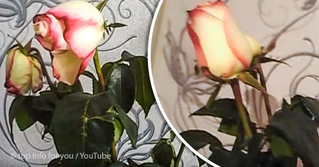 This Overnight Boiling Water Trick Is Guaranteed To Revive Your Wilted And Dying Roses