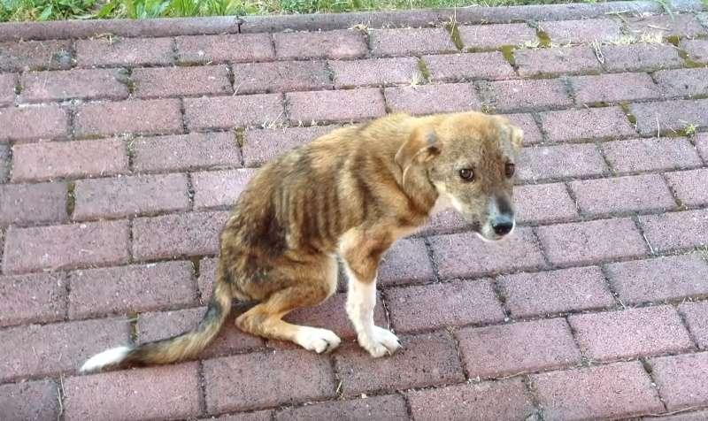 У бездомного щенка был травмирован позвоночник. Но это не помешало ему обрести семью на другом конце света!