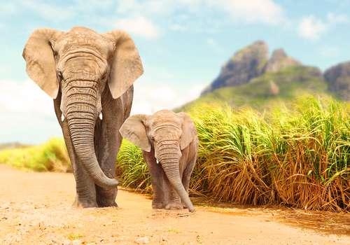 Elefanta ciega de 73 años lloró cuando la rescataron de la vida que llevaba en un centro turístico