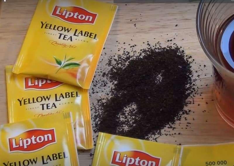 Ne jetez plus vos sachets de thé usagers ! Voici comment en tirer de bon plants pour un jardin riche à la maison
