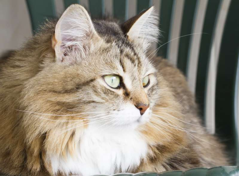 Почему коты вечно всматриваются в пустоту?