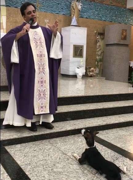 """Cãozinho religioso! Ele """"assistiu"""" à missa e, na hora da comunhão, entrou na fila para receber sua hóstia"""