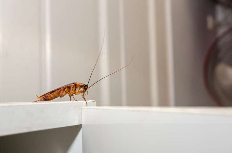 5 эффективных способов избавиться от насекомых в вашем доме5 эффективных способов избавиться от насекомых в вашем домеcockroach on white cupboard in the kitchen