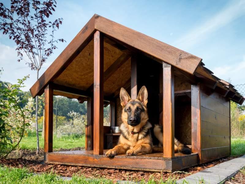 """Empresa transforma cenizas de las mascotas en """"patas de cristal"""" para llevarlas cerca del corazón"""