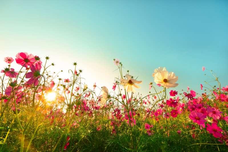 « J'ai besoin de fleurs et vous en avez plein votre jardin ! » Une mariée se faufile dans le jardin de sa voisine et y vole des fleurs qui coûtent cher-
