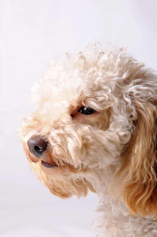 Los 9 perritos enjaulados y abandonados a su suerte encontraron ayuda gracias a las redes sociales