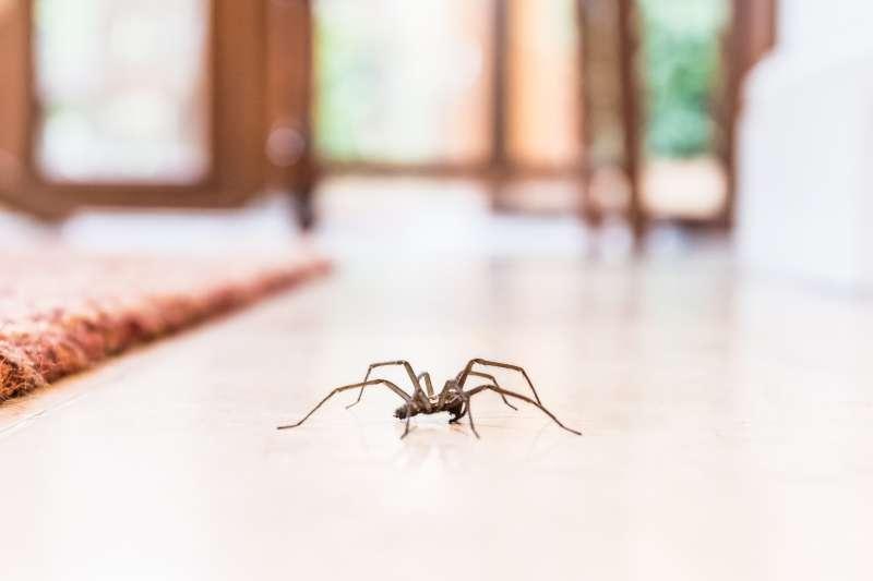 5 эффективных способов избавиться от насекомых в вашем доме5 эффективных способов избавиться от насекомых в вашем доме