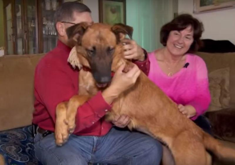 Déprimé, ce chien voit son ancienne famille venir au refuge y prendre un autre chien avant qu'on l'adopte enfin