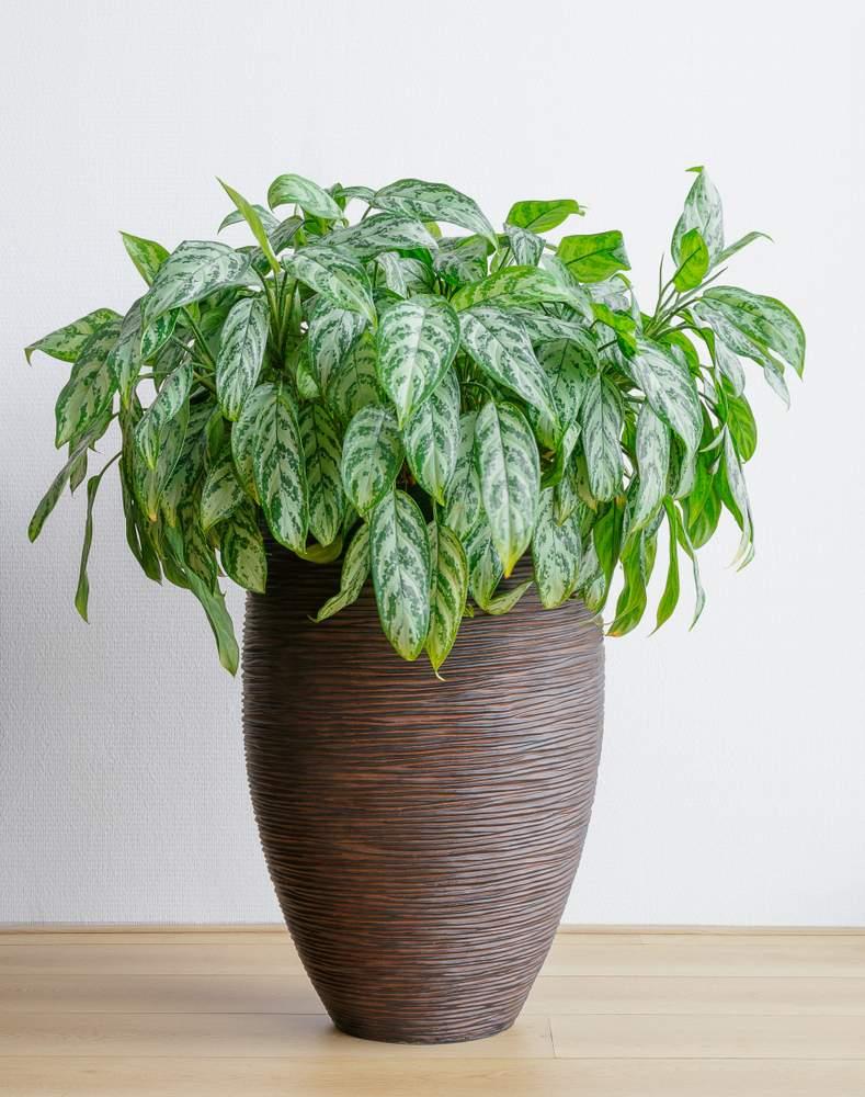 Pianta Da Ufficio Poca Luce 10 piante da interno che richiedono poca luce e possono