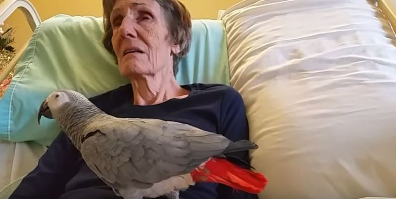 Grandma Says Last Goodbye To Her Parrot Pet After 25 Years Together, And The Creature's Reaction Is So Emotional