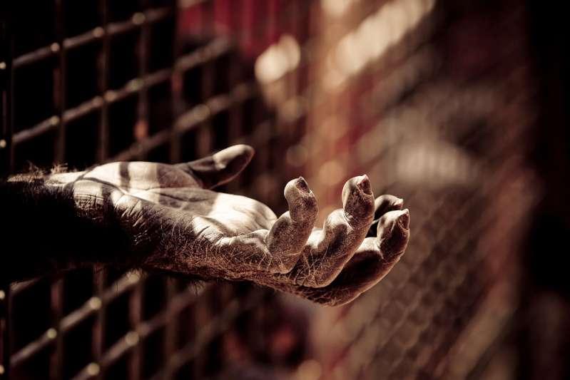 Современный зоопарк: обратная сторона жизни животных, которую посетителям не показываютthe hand of a chimpanzee into a zoo jail